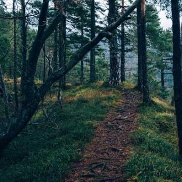 Life Path Readings